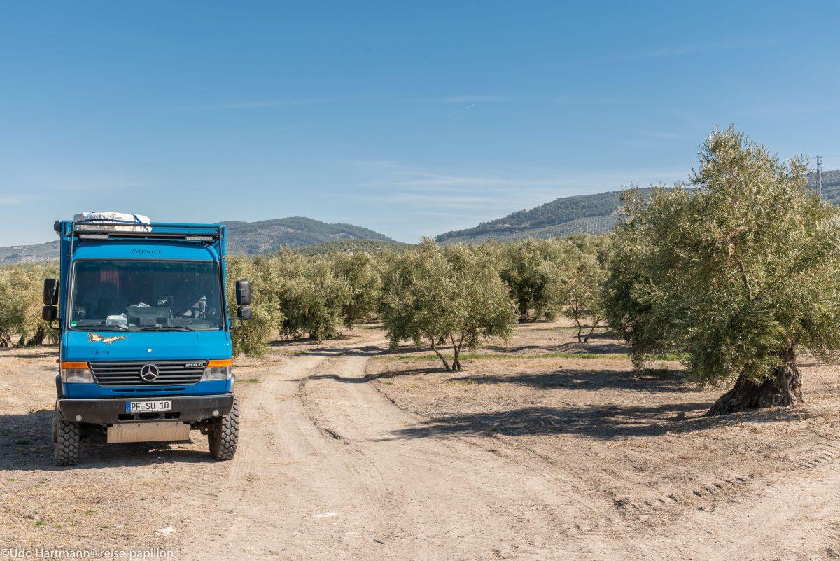 Mittagspause in einem Olivenhain