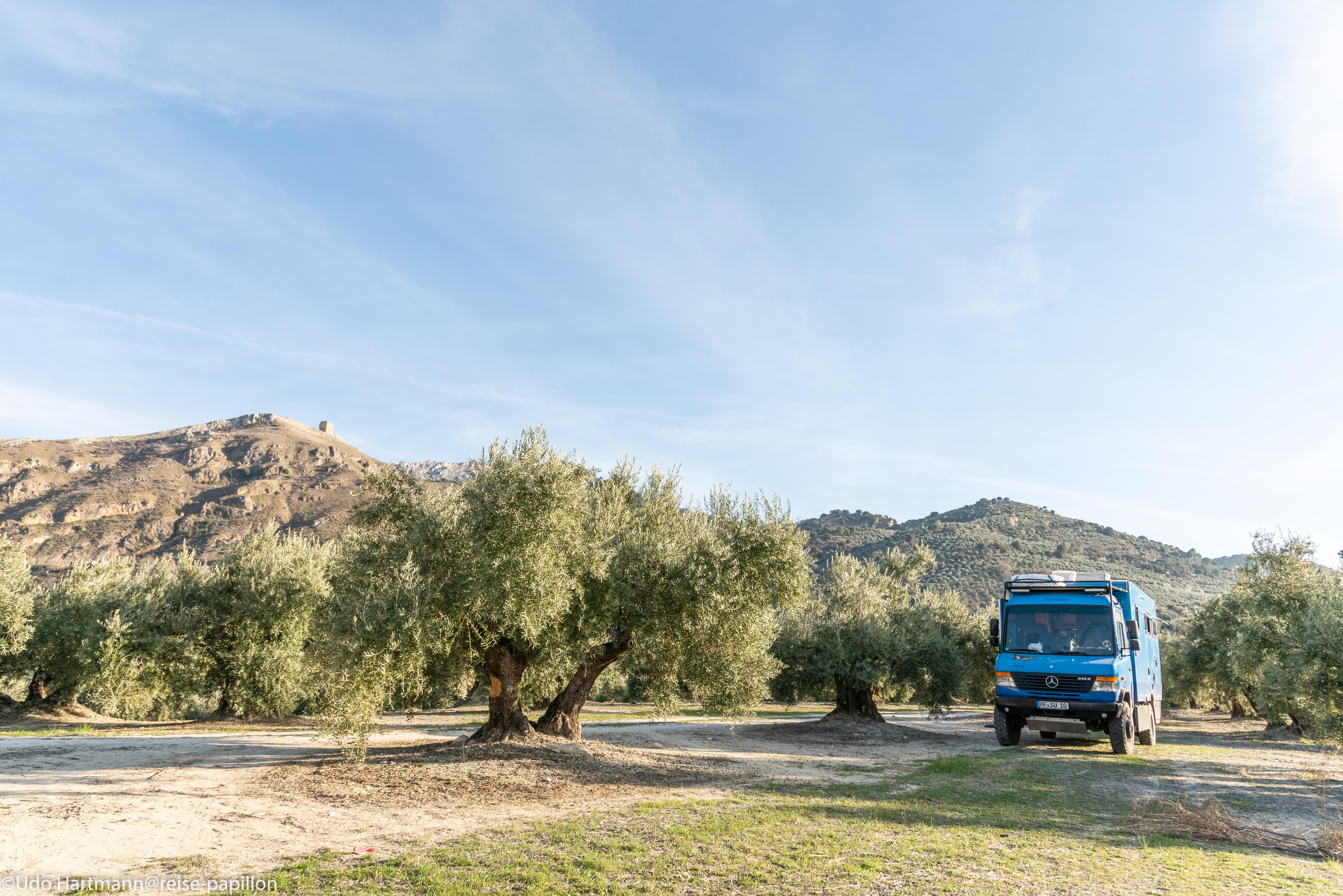 Nachtplatz im Olivenhain